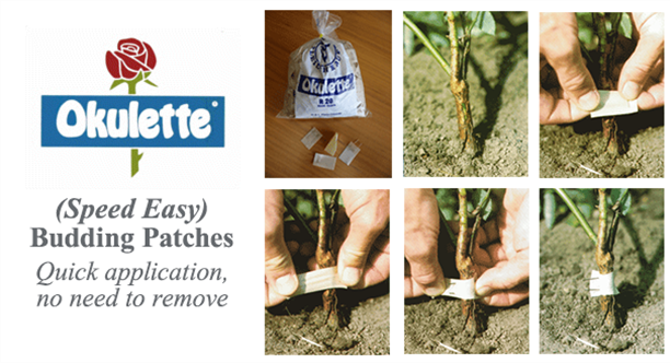Okulette Speed Easy Budding Patches - Quick application, no need to remove